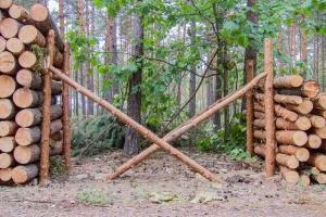 wycinka-drzew-las-expo
